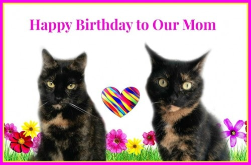 birthday-cats