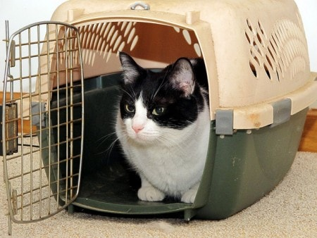 cat-in-carrier