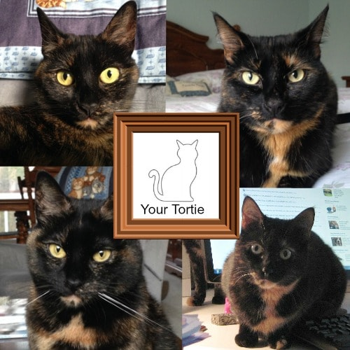 tortitude-photos