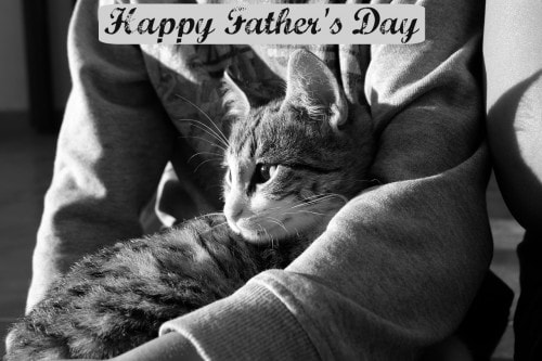 Happy fathers day 2015 the conscious cat fathers day cat sciox Gallery