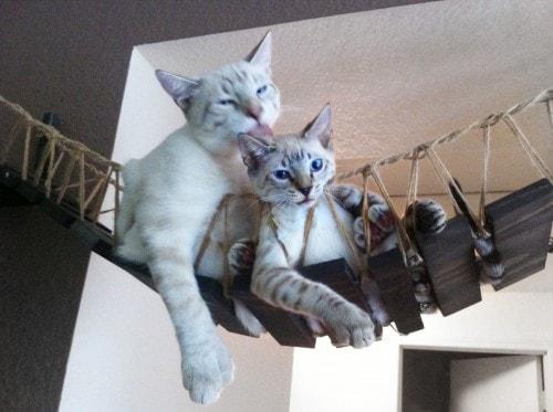 cat-bridge