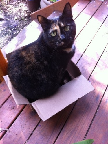 cat-in-box