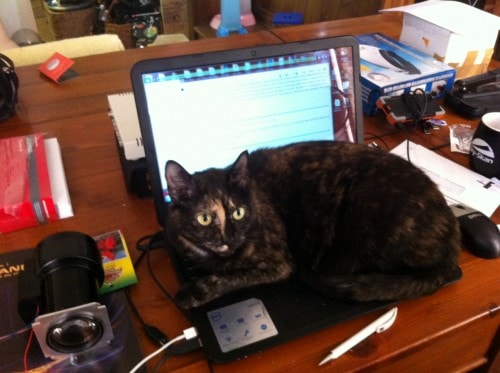 Lucy Cat.Net