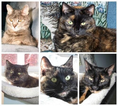 rescue-cats