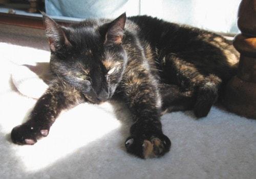 tortoise-shell-cat-in-the-sun