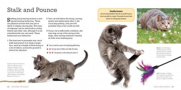 how-smart-is-your-cat