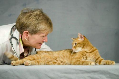 veterinary-specialist