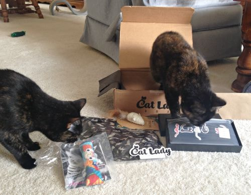 cat-lady-box