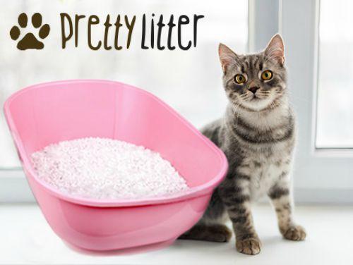 Pretty-litter-startup-u