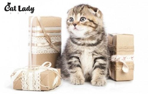 Cat giveaway