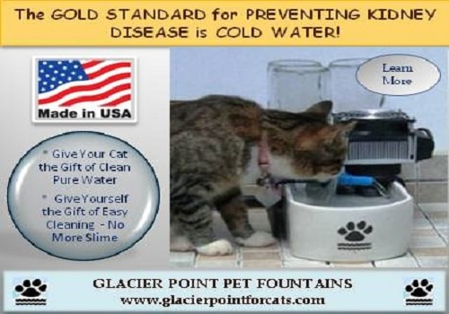glacier-point-cat-fountain