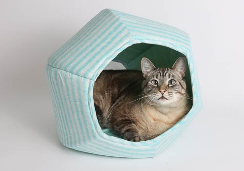 cat-ball