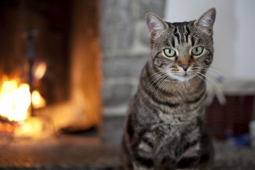 cat-fireplace