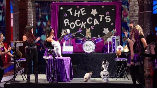 acro-cats-late-show