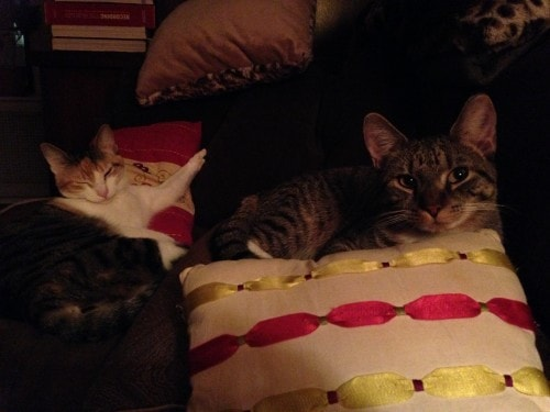 relaxed-cats