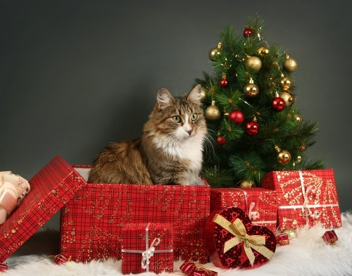 cat-christmas-tree-presents & Last Minute Holiday Shopping Ideas for Cat Lovers - The Conscious Cat