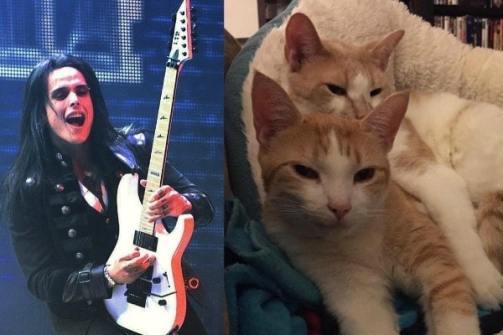 cats-and-guitars-bill-hudson