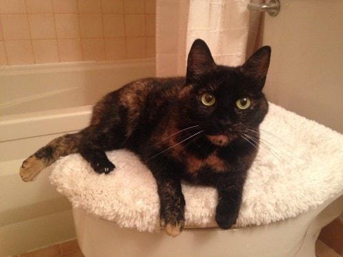 cats-bathrooms