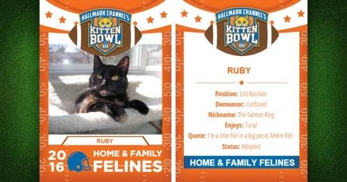 Ruby-Kitten-Bowl