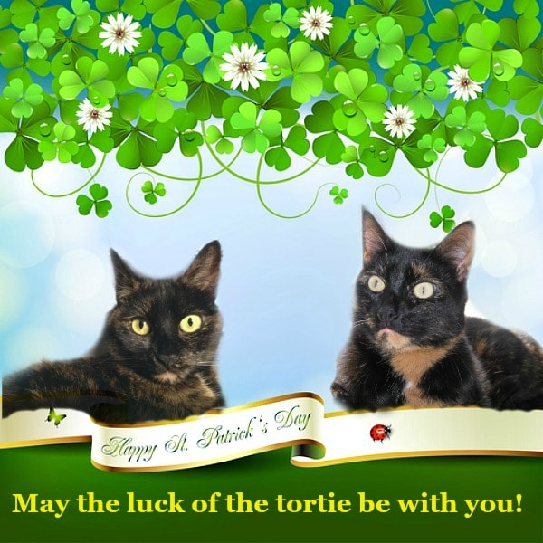 st-patricks-day-cats