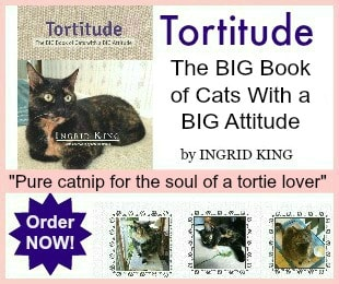 Tortitude 300x250 with border at risk edited