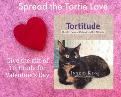 tortitude-the-big-book-about-cats-with-a-big-attitude