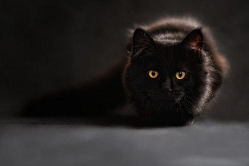 black-cat-the-ninth-life