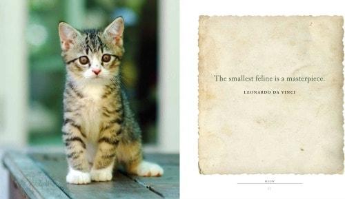 cat-quotes
