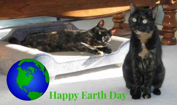 earth-day-cats