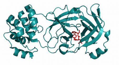 fip-antiviral-treatment-kansas-state