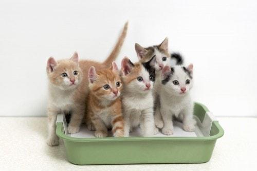 litter-box