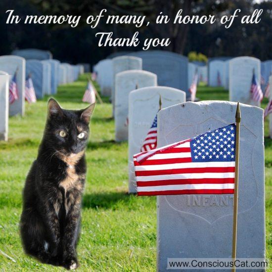 Memorial-Day-cat