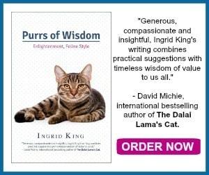 purrs-of-wisdom
