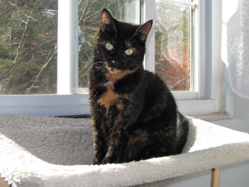 cat-window-seat