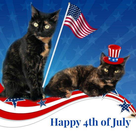 4th-of-july-cats