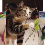 dabird-cat-toy