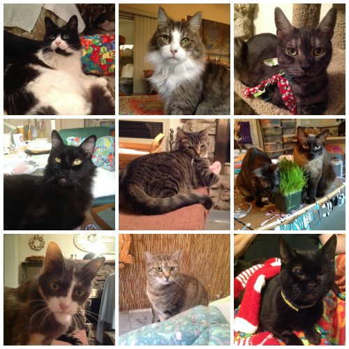 9-cats-collage