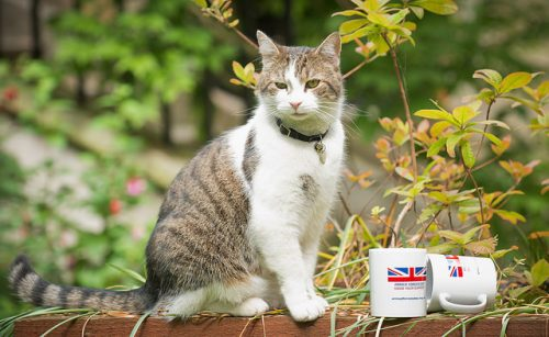 Larry-Downing-Street-cat