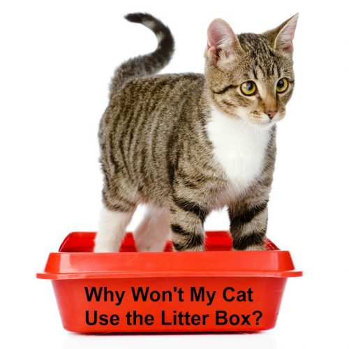 why-wont-cat-use-litter-box