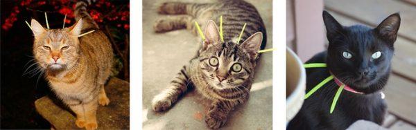 ChirpOn-cat-collar
