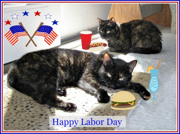 labor-day-cats