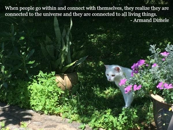 cats-spiritual-connection