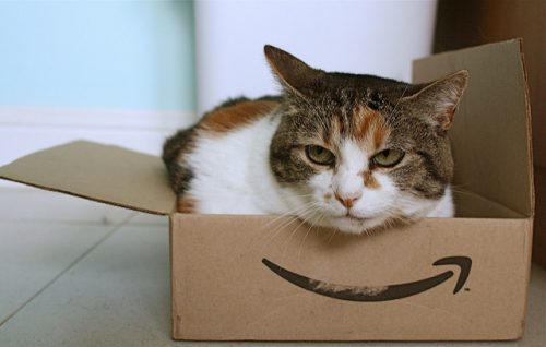cat-amazon-box