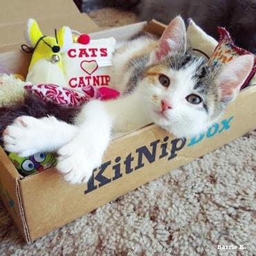 kitnip-box