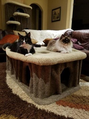 kitty-cat-condos
