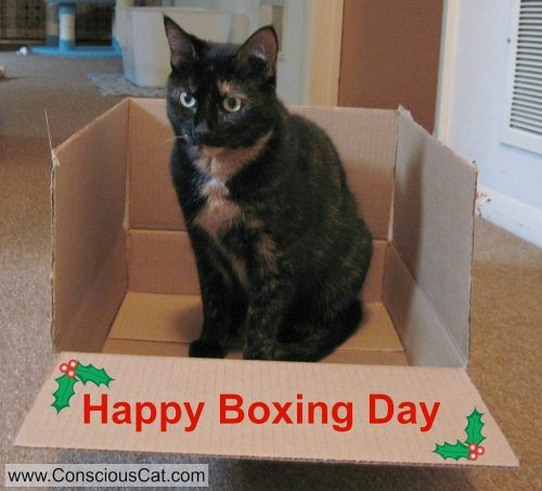 boxing-day-cat