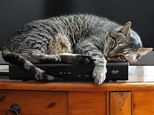 feline-lifestyle