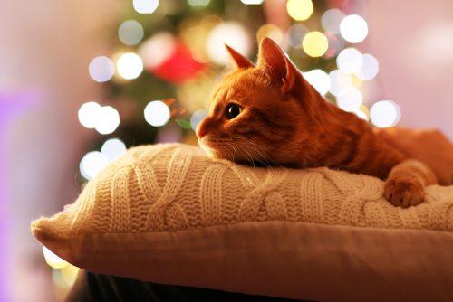 cats christmas soyvirgo.com