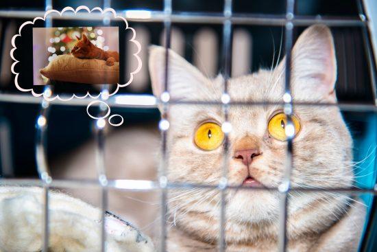 help-homeless-cats