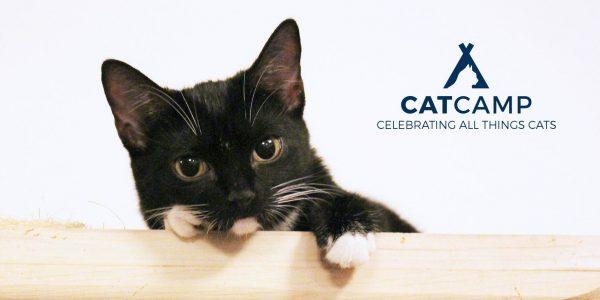 Cat-Camp-NYC